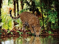 Clementoni 32537 Leopard 2000 Teile Puzzle High Quality Collection