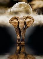 Clementoni 39416 Der Elefant 1000 Teile Puzzle High Quality Collection