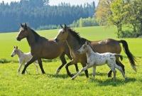 Schmidt 55588 Pferde 2x26, 2x48 Teile Puzzle-Box im...
